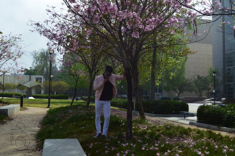 Cherry Blossem 1
