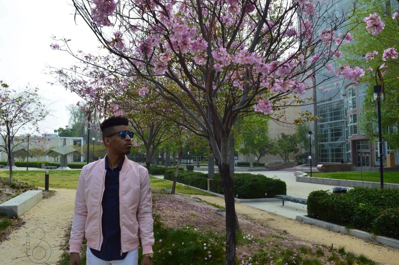 Cherry Blossem 2